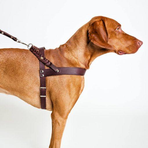 Miljøvennlig økologisk sele for hund 3