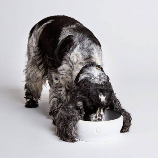 Hundeskåler miljøvennlige økologiske kvalitet hvit 4
