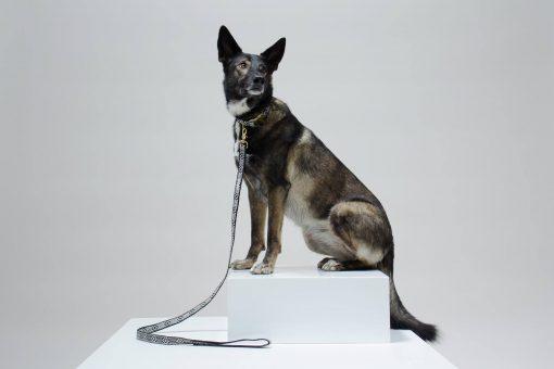 Miljøvennlig økologisk kobbel for hund 2