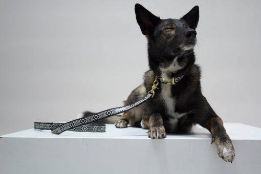 Miljøvennlig økologisk kobbel for hund 3