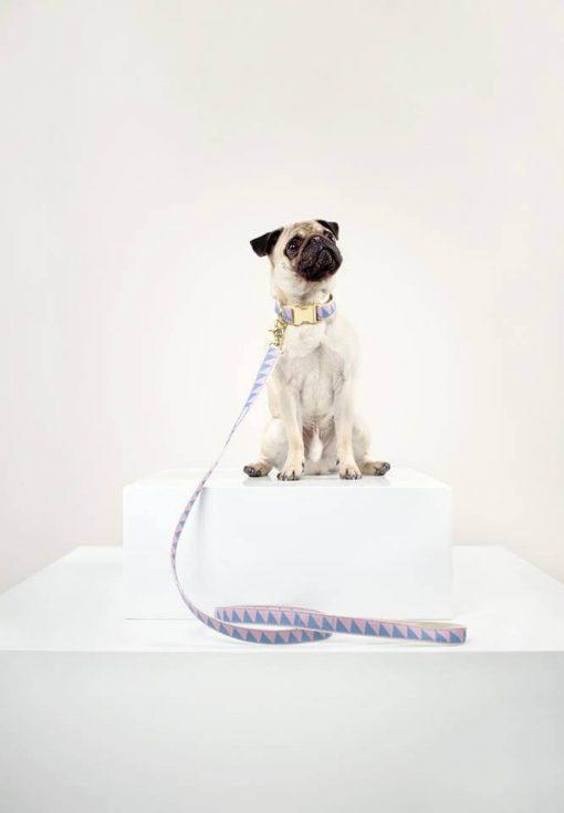 Miljøvennlig økologisk hundehalsbånd 3