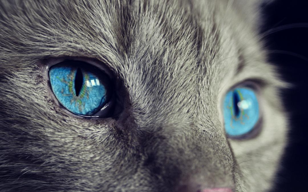 Kattens syn (7 ting du ikke visste)