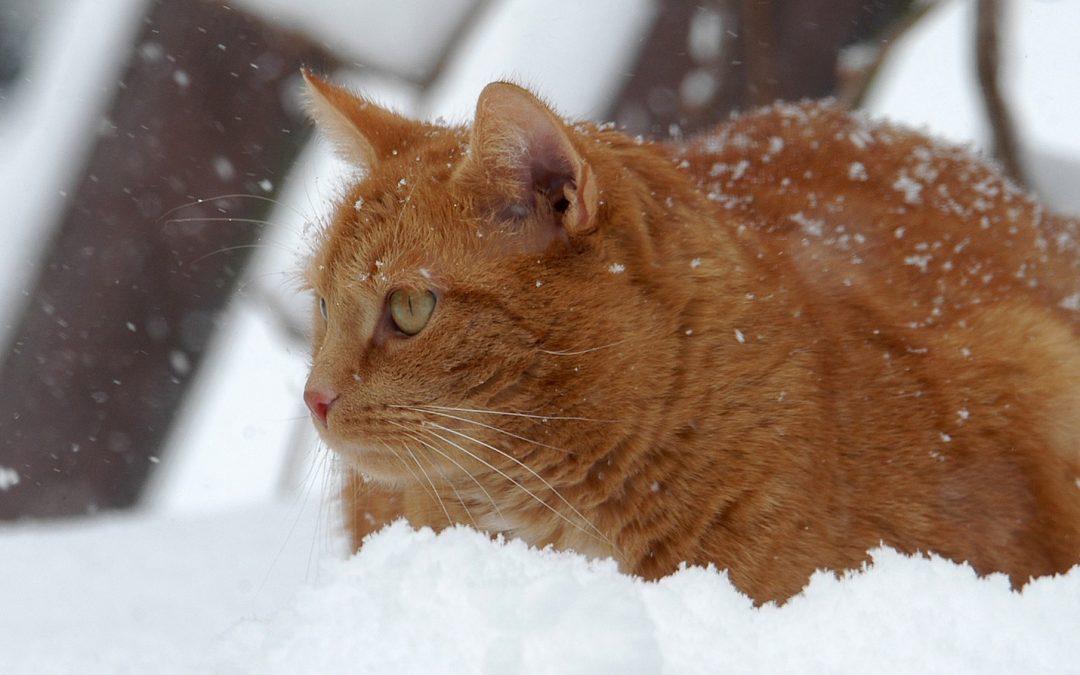 Katter i kulden