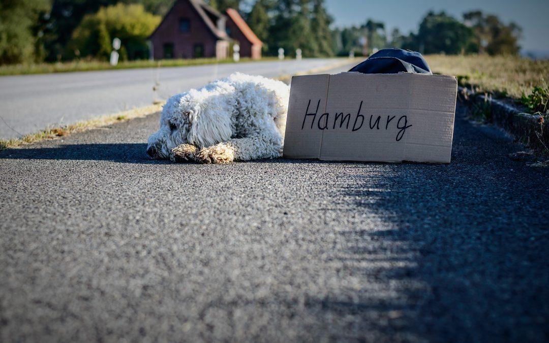 Ferie til utlandet med hund